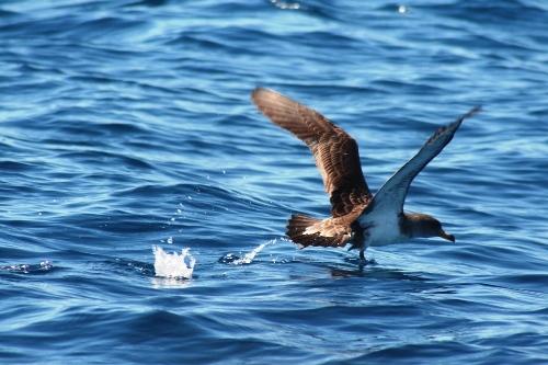 aves-marinhas_500.jpg
