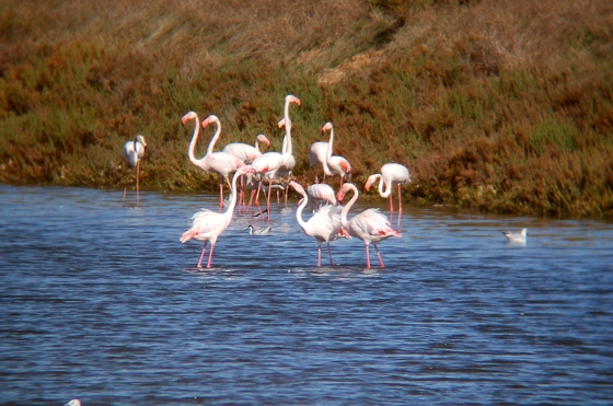 Birdwatching Algarve » Ria Formosa