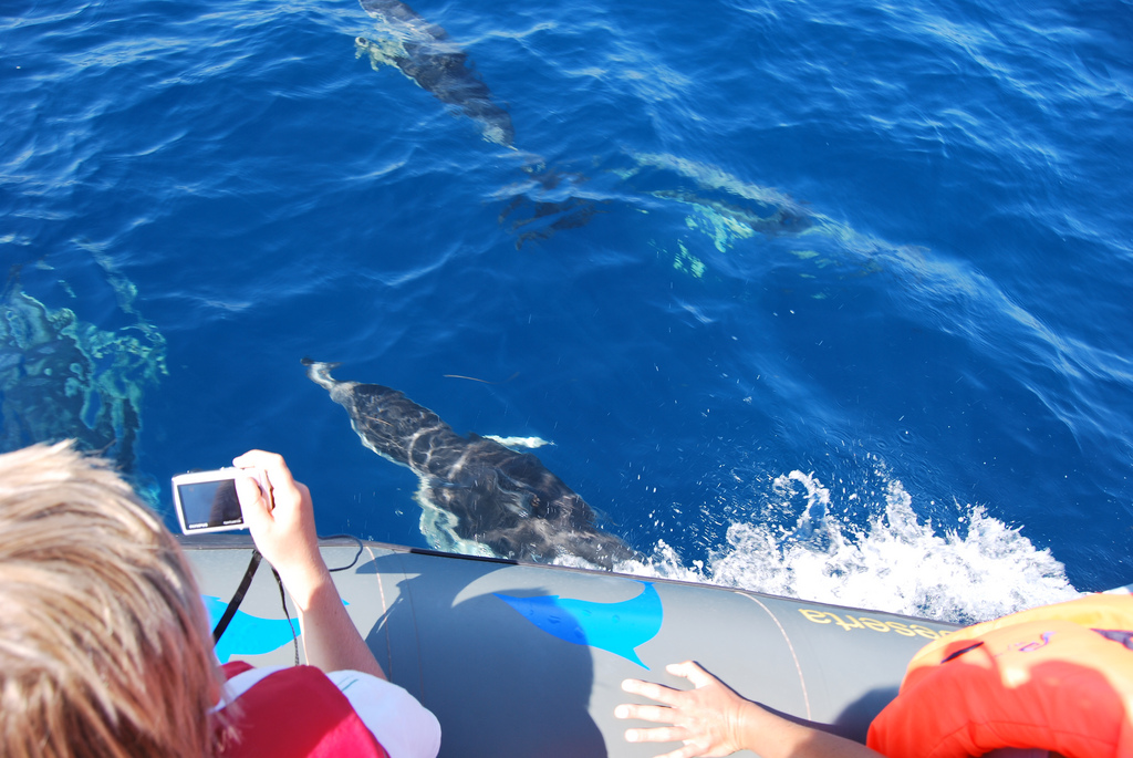 Dolphin watching Boat Trips Algarve