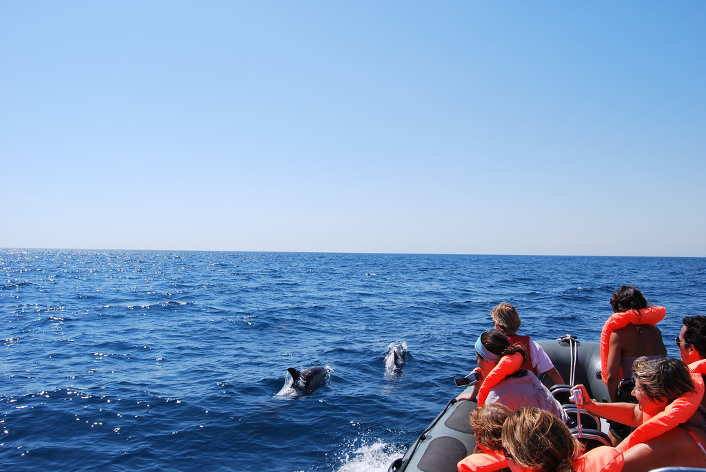 Dolphin watching Algarve