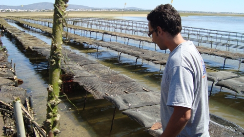 Oyster farms in Ria Formosa Olhão. Natura Algarve