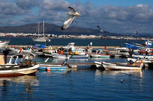 Ilha da Culatra - Ria Formosa - Algarve. Natura Algarve