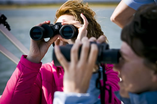 Boat Trip: Birdwatching in Ria Formosa (2,5h)